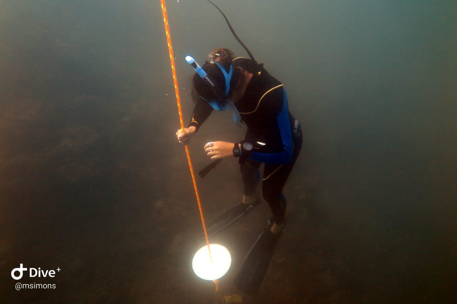 freediving costa rica Level 2 freediving course PADI Advanced Freediver course Quepos Costa Rica