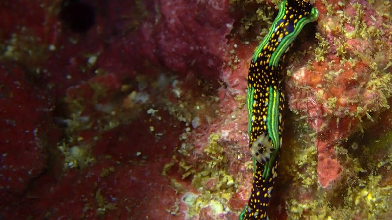 Costa Rica Diving Tours - Photos of Animals